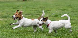 Zalety przeciwpasożytniczej obroży dla psów